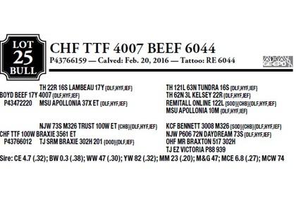 CHF TTF 4007 BEEF 6044