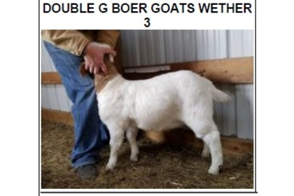 DOUBLE G BOER GOATS WETHER